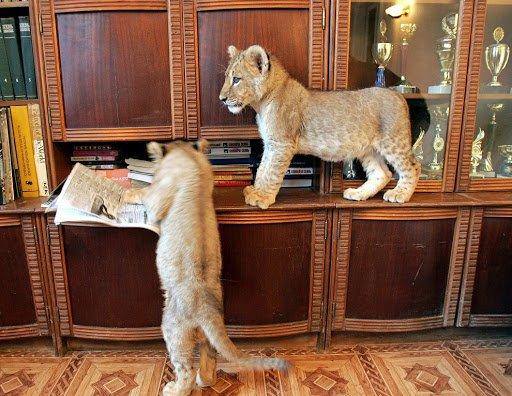 Как сделать новую квартиру удобной для животных
